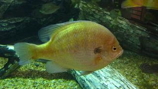 NC Aquarium - Roanoke Island Preview