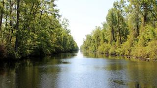 Dismal Swamp State Park Preview