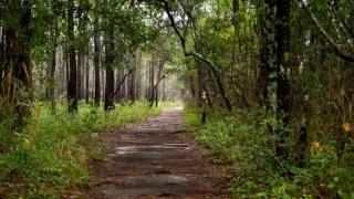 Carolina Beach State Park Preview