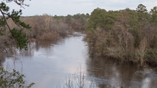 Cliffs of the Neuse State Park Preview