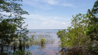 Lake Waccamaw State Park Preview