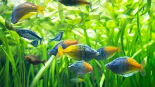 Shedd Aquarium Preview